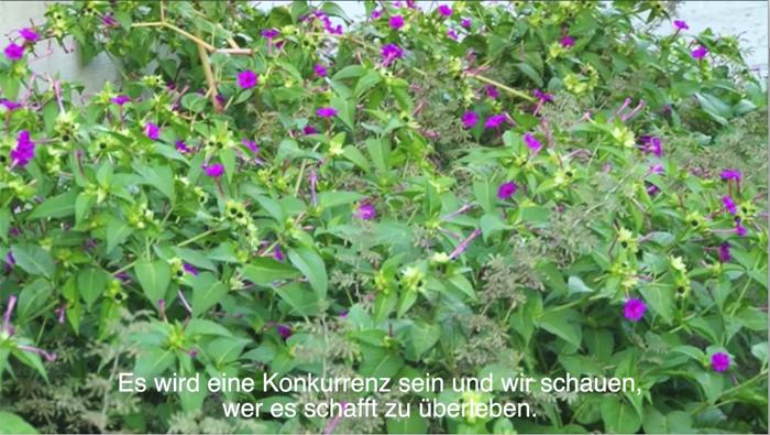 wild-green-tea-web